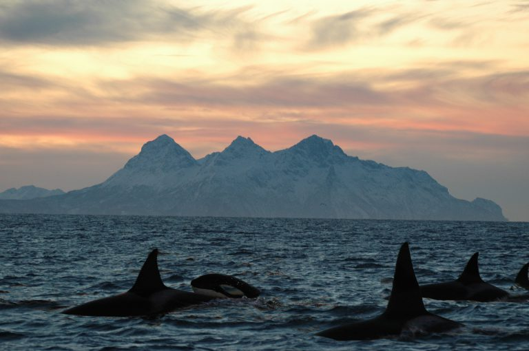 Whale watching in Norwegen